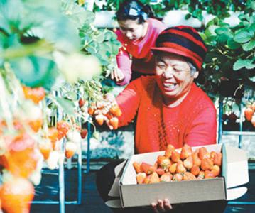 网上接订单 草莓卖得火