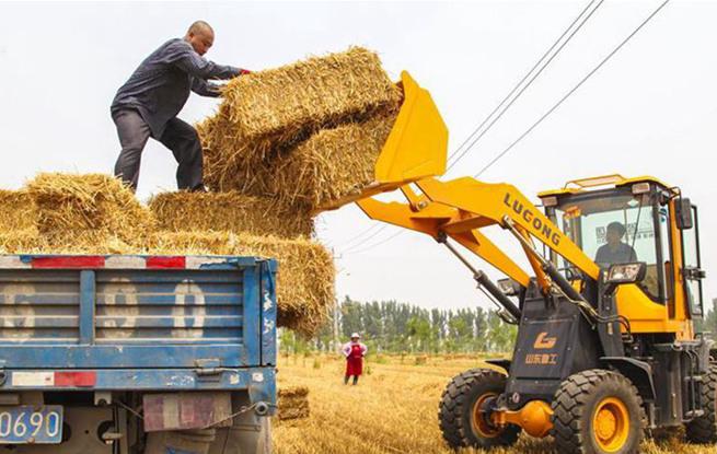 河北永清:小麦歉收 秸秆变宝