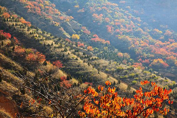 在甘肃省定西市安定区东山拍摄的秋景.陈永刚摄