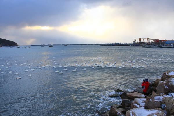 1月20日早晨,一位摄影爱好者正在烟墩角抓拍天鹅。摄影:人民日报记者 徐锦庚