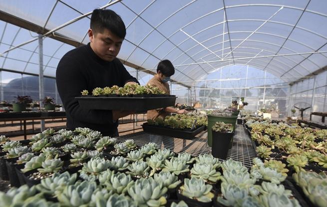 京津冀农业科技创新联盟成员已超60家
