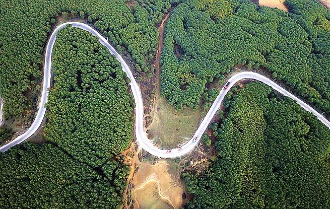 2017年全国造林七百三十余万公顷