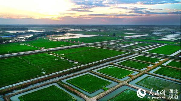 潜江虾稻共作基地