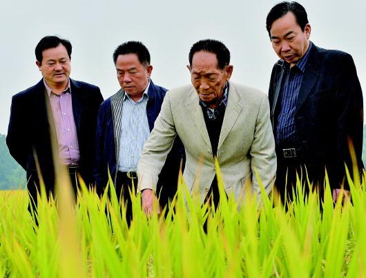 袁隆平:把对祖国的热忱结成饱满的稻穗