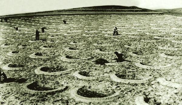 六十年代,右玉县植树造林所挖的鱼鳞坑。
