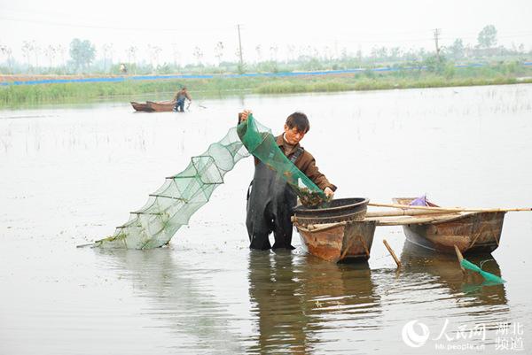 专业养殖小龙虾