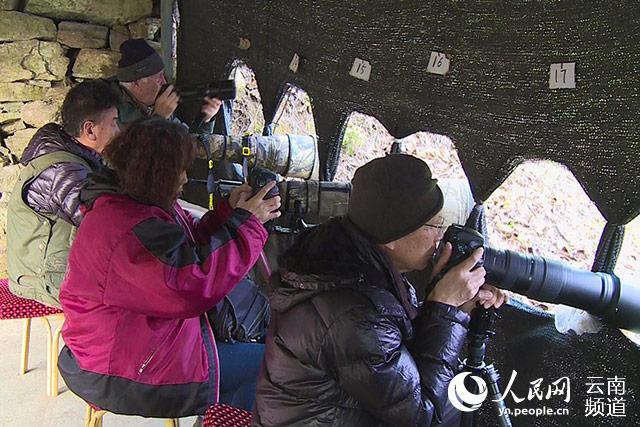 摄影师在鸟塘拍鸟