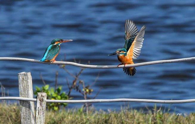 海南举行2020年水鸟调查